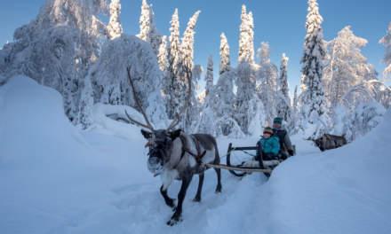 Reindeer sledging I