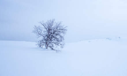 The second tree after the kalfjäll