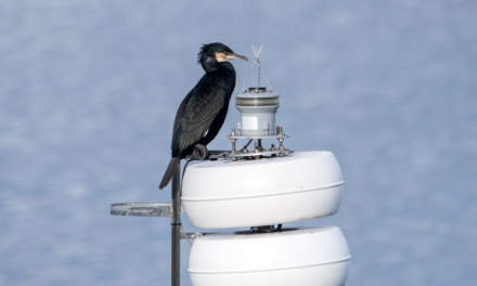 A Cormorant sitting on a sea-mark