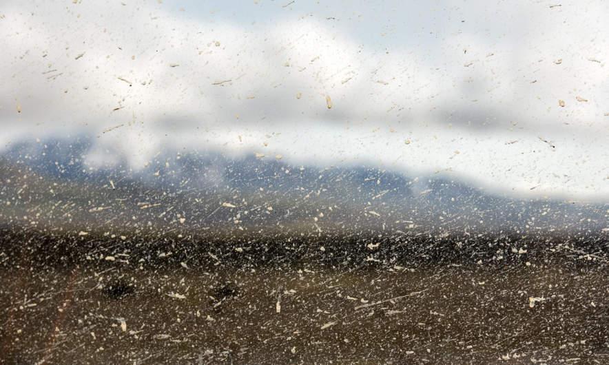 Bonus image –splashes of mud