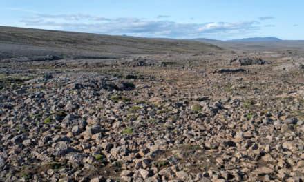 Lava rock desert I