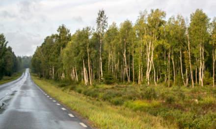 Driving to Skellefteå airport
