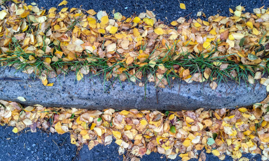 A herald of autumn in Skelleftehamn