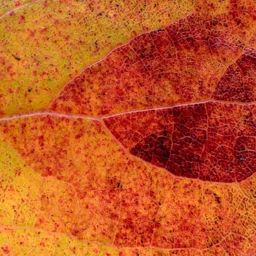 Autumnal find