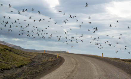 Birds crossing