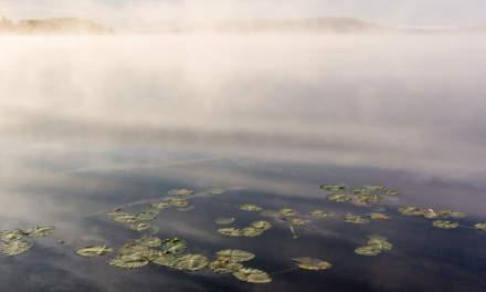 Foggy river Skellefteälven I