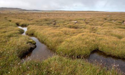 Wide view – Steingrimsfjarðarheiði