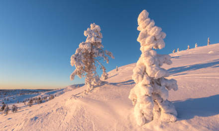 Snow packed trees II
