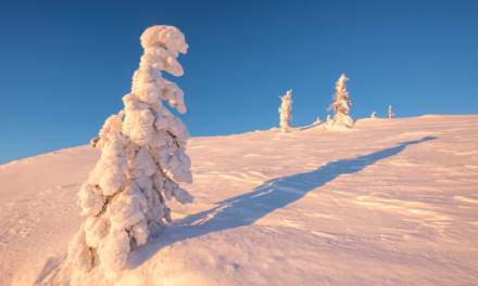 Snow packed trees III