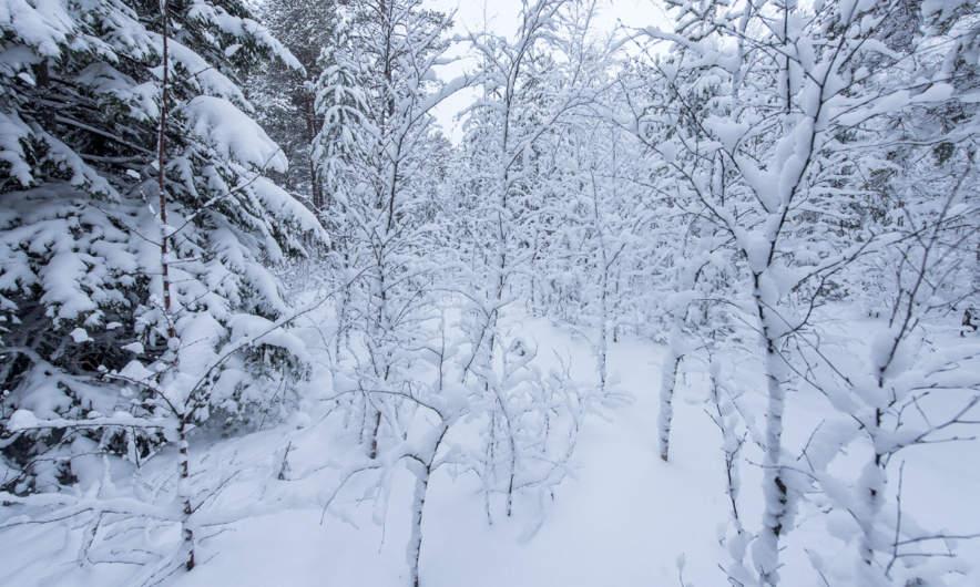 Dense forest I