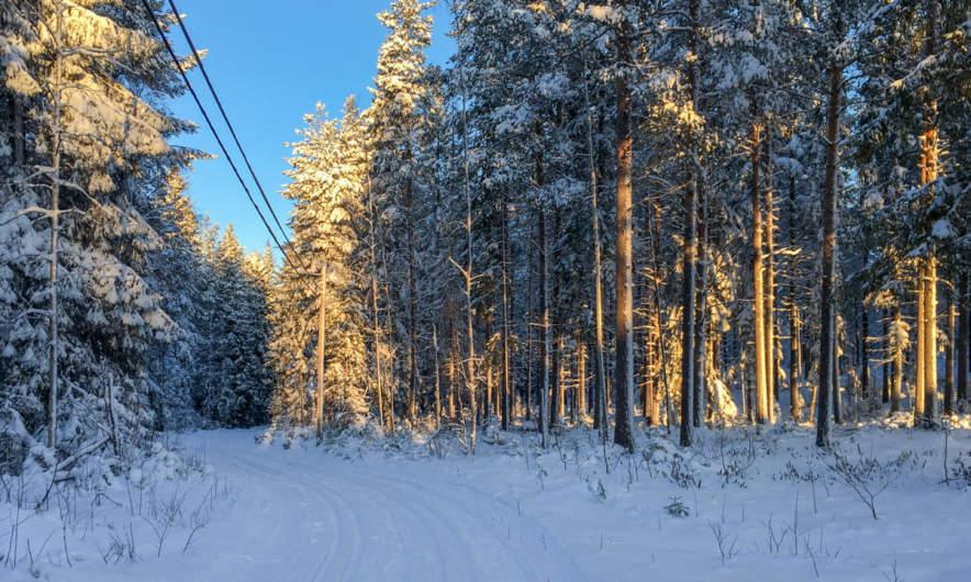 Ski track in Skelleftehamn I