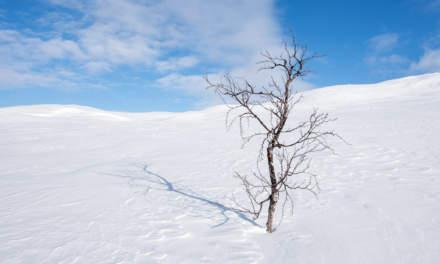 Lonely tree I
