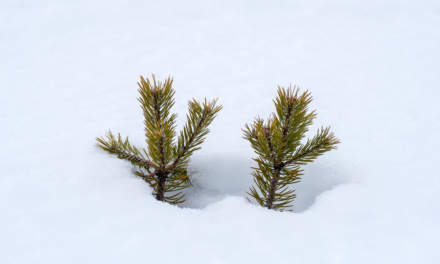 Two tiny trees