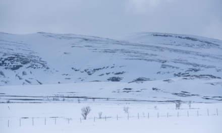Winterland II