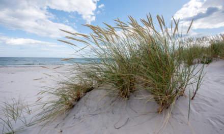 Dunes in Sandhammaren