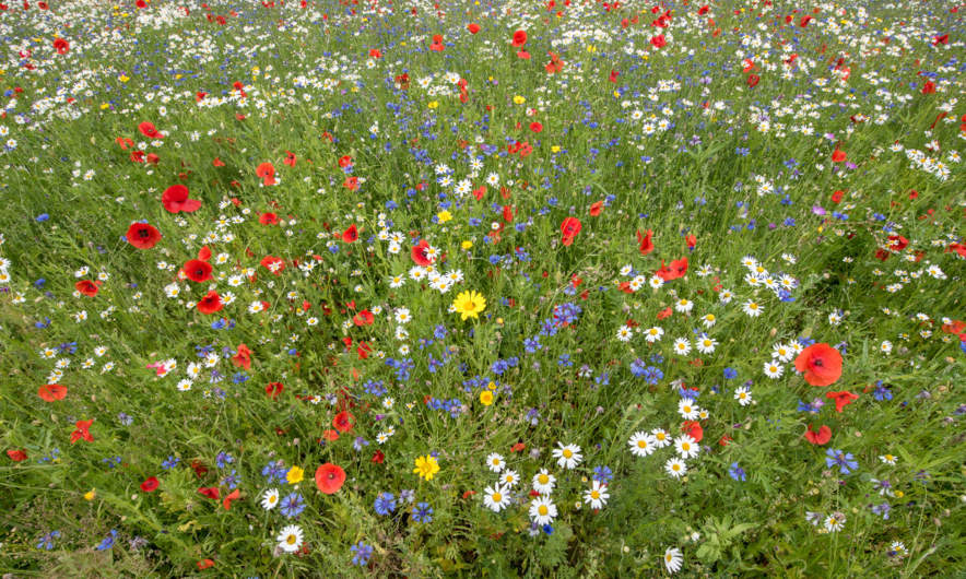 Hovdala slott: flower field
