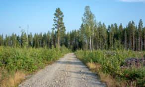 Gravel road I