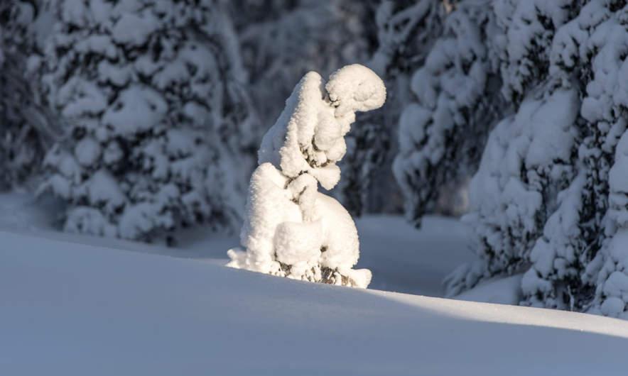 A snow angle