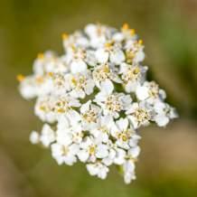 Flower XVIII