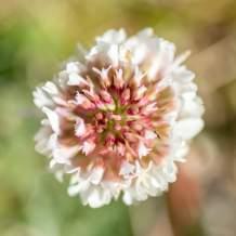 Flower XIX