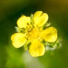 Flower XX