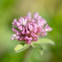 Flower XXIV