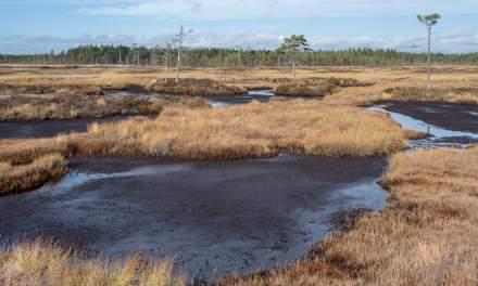 Mud flats I