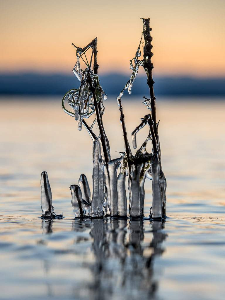 Ice covered plant standing in the sea