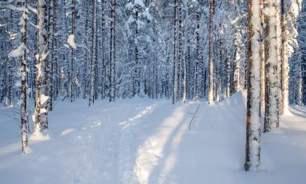 Skiing through the snowy forest I