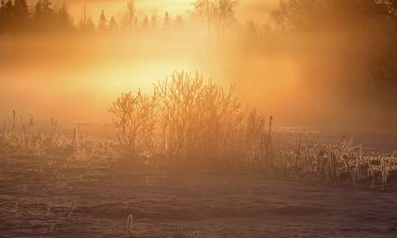 Sun illuminating the frozen fog