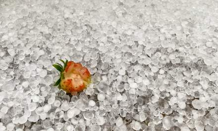 Strawberry lying in the hail
