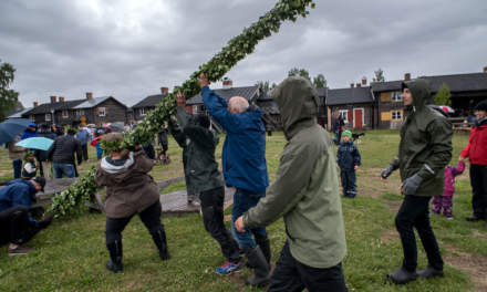 "Erecting ""midsommarstången"" –the maypole"